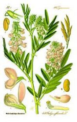 Sedmikráska bylinný extrakt Jestřabina 250 ml - produkce a kvalita mateřského mléka, doplněk stravy Rodinná farma Sedmikráska