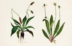 Sedmikráska bylinný sirup Zdravé dýchání 500 ml - dýchací soustava, antioxidant, imunita, doplněk stravy Rodinná farma Sedmikráska