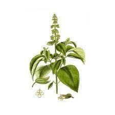 Sedmikráska ovocno bylinný sirup Malina s bazalkou 500 ml -Trávení, dýchací soustava, zklidnění, krevní oběh, doplněk stravy Rodinná farma Sedmikráska