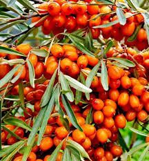 Sedmikráska ovocný sirup Rakytník 500 ml -* Imunita*únava a vyčerpání* trávení* srdce a cévy*, doplněk stravy Rodinná farma Sedmikráska