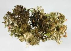 bylinné a ovocno - zeleninové extrakty