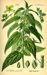 Sedmikráska bylinný sirup Detoxikace 500 ml - pročištění , trávení , funkce jater, vylučování vody. Rodinná farma Sedmikráska
