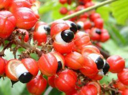 Sedmikráska bylinný sirup Vitalita 500 ml osvěžení těla, psychická i fyzická vitalita, energie, potlačení únavy, imunita Rodinná farma Sedmikráska